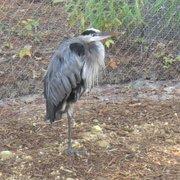 Un ave que pareciera tener una sola pata, pero en realidad tiene dos. Sólo que descansa en una y la otra la recoge. Especial detalle en el aviario del VLM.