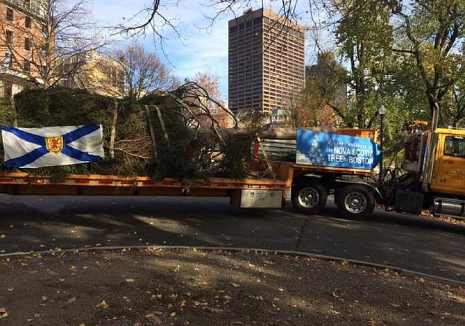El 21 de noviembre llega el árbol de navidad oficial de Boston