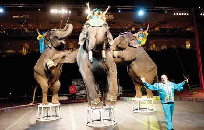 El circo regresa a Cedar Park