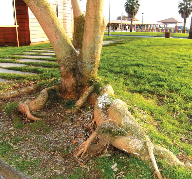 Evite que las ramas o las raíces de los grandes árboles crezcan y hagan daño a la estructura de la casa o a la de nuestros vecinos.