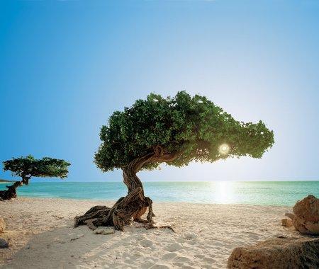 En Aruba están algunas de las mejores playas del mundo