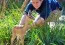 Foto: Zoológico de Houston