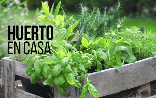 Cultivar sus propias hortalizas puede ser divertido, fácil y económico.