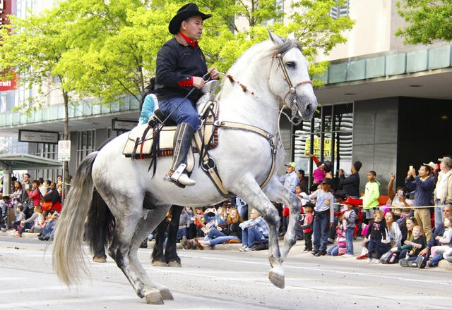 El desfile que tiene una duración de aproximadamente dos horas muestra las diferentes peripecias que pueden hacer los jinetes con sus caballos.