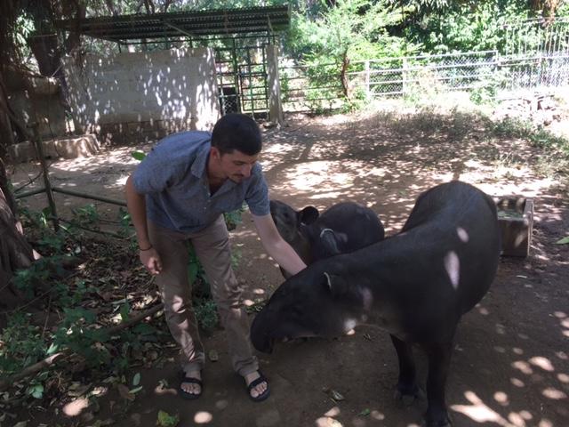 El investigador Chris Jordan con un tapir salvaje en Nicaragua