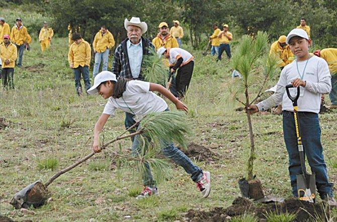 Siembran árboles para combatir contaminación