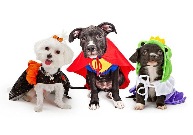 Concurso de disfraces de mascotas en Faneuil Hall