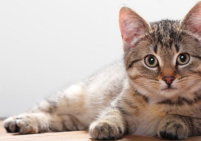Veterinarios explican 3 comportamientos que le deben preocupar sobre su gato