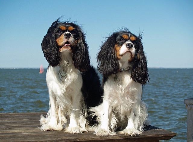 Seis cachorros desaparecen de una tienda en Virginia