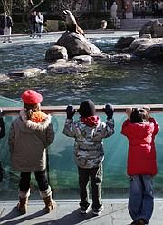 Los escolares observan cómo los leones marinos de California se alimentan de peces en el zoológico de Central Park en Nueva York el 10 de enero de 2007.