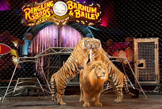 El circo más antiguo del mundo cesa sus actividades