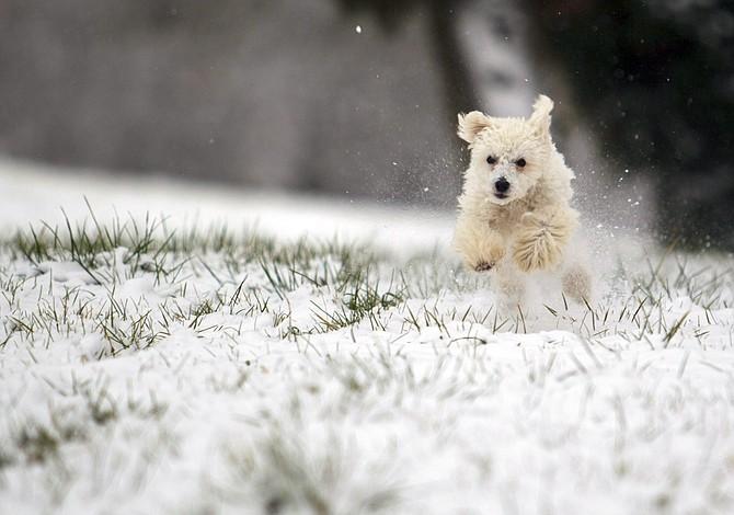 Mascotas y la nieve - Lo que hay que hacer durante una tormenta de nieve