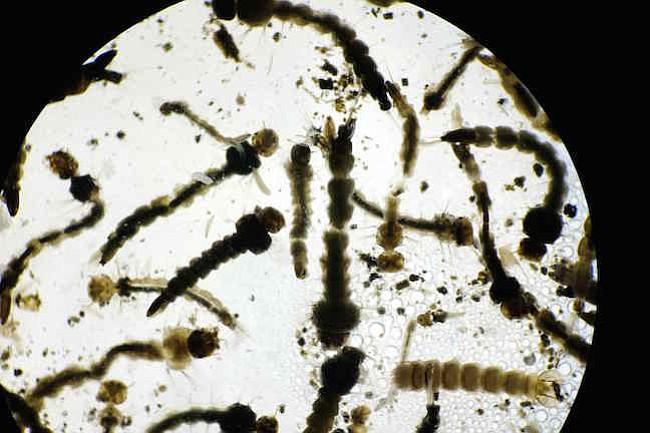 Las vacunas contra el zika