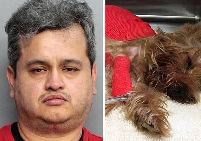 Hombre mató a su perrita porque vomitó en su carro