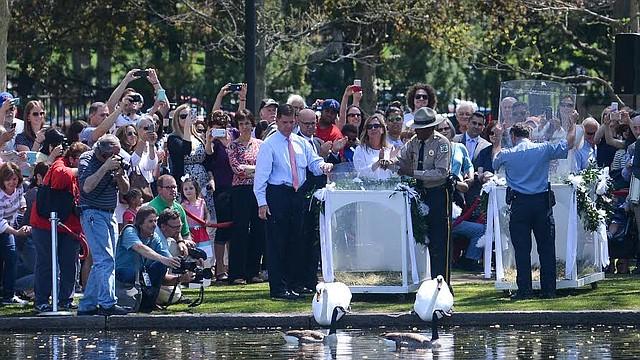 Ceremonia de bienvenida de los cisnes a la laguna del Public Garden, con el alcalde Martin Walsh