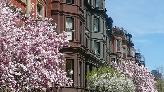 Uno de los espectáculos que nos ofrece la naturaleza en Boston es el florecimiento de los árboles, que se da entre abril y mayo y dura pocos días.