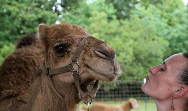 Florida woman says she was attacked by camel at