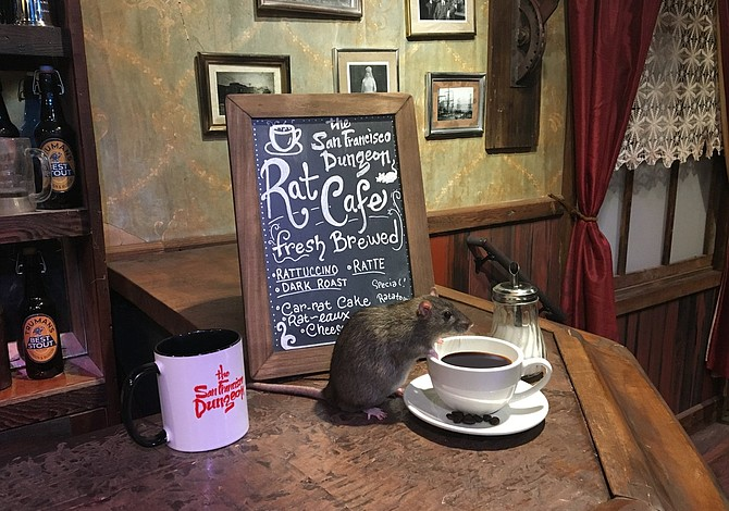 Ya te podrás tomar un café rodeado de ratas
