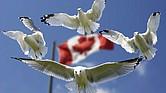 ¡Feliz Cumpleaños Canadá!