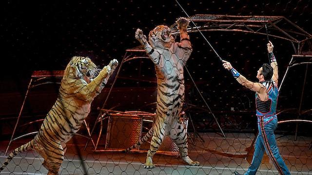 Alexander Lacey y su gran show de gatos fueron un favorito de la muchedumbre en el último día de Ringling Bros. y Barnum & Bailey Circus en mayo.
