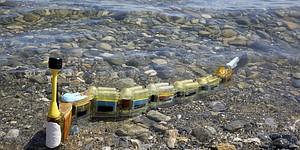 La anguila puede detectar fuentes de polución en el agua
