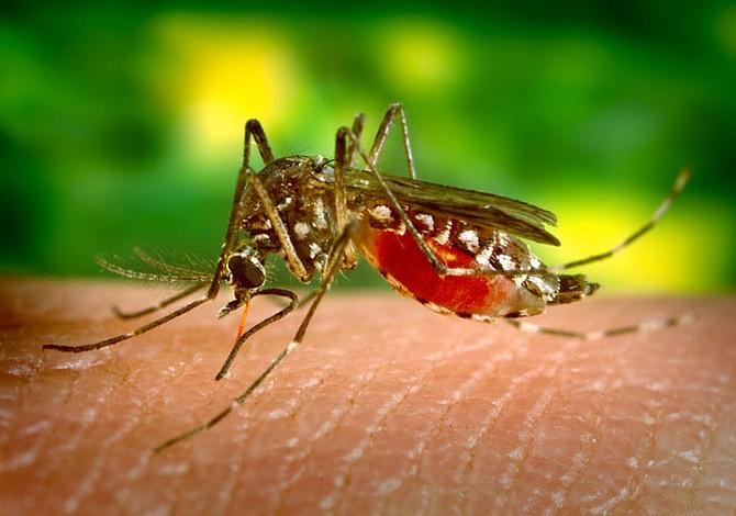 Científicos chinos desarrollaron posible inhibidor del virus del zika