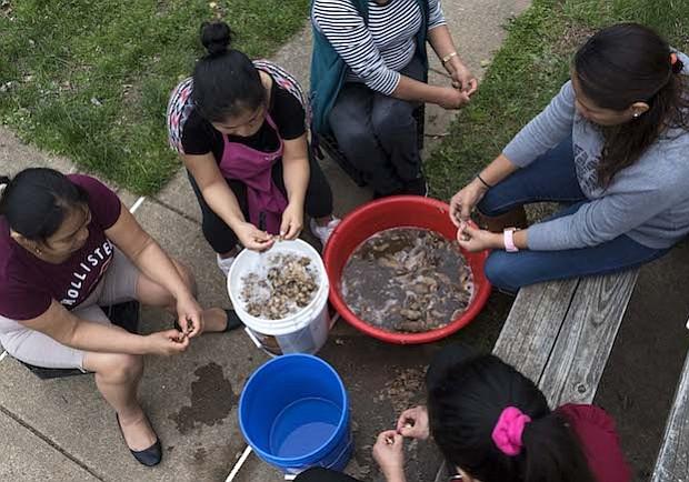 CHUÑO. Un grupo de mujeres preparan chuño, el cual es el resultado de la congelación y deshidratación de la papa importada de Bolivia, para cocinarlo como parte de una kermés con el objetivo de recaudar dinero para una familia de Bolivia que sufrió una explosión producto del tanque de gas en su cocina.