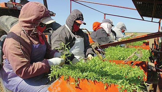 Plan de visas para trabajadores agrícolas es inviable