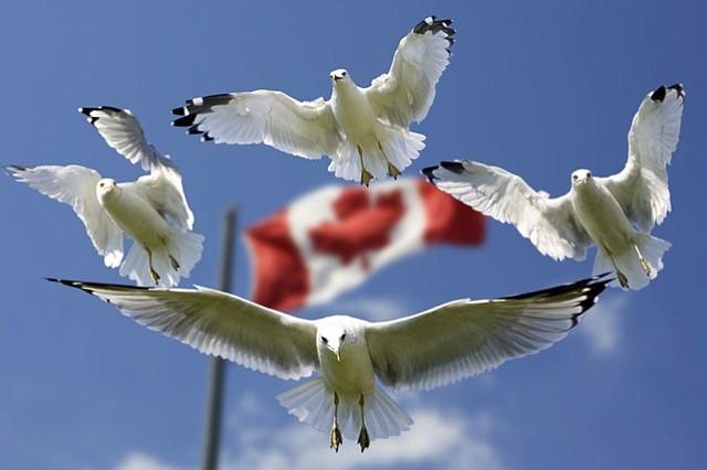 Quienes buscan asilo viajan de Estados Unidos a Quebec por miedo a que sus permisos temporales expiren
