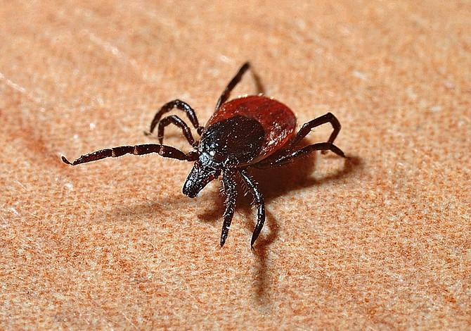 Parece que han encontrado la solución a la enfermedad de Lyme