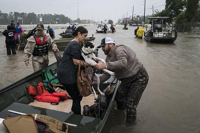 Un perro es ayudado en un bote después de ser rescatado en Houston.