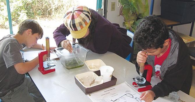 Alumnos del 4to. Grado en su práctica  de laboratorio sobre el Plancton y la cadena alimenticia. Foto-Cortesía.