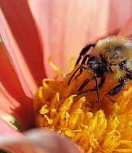 Las abejas son esencial para la supervivencia y bien estar de comunidades por todo el mundo, y están siendo amenazadas día a día, debido a una serie de factores, en gran parte impulsados por humanos.