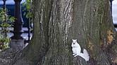 La ardilla blanca posando en el Public Garden