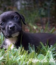 ¿Puede el video de un cachorro hacer que compres un seguro de salud en los mercados del Obamacare?