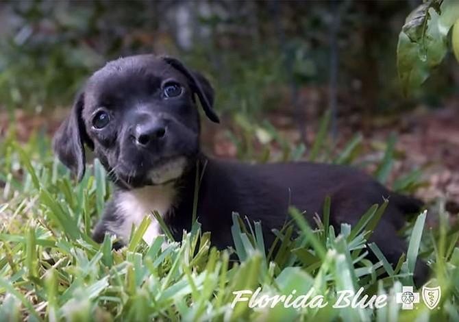 Cachorros y pacientes para convencer a latinos de comprar seguro médico