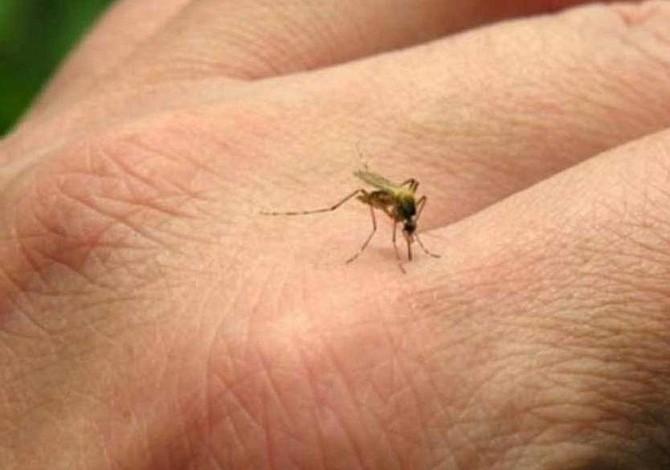 Protección contra el dengue puede funcionar también para el zika