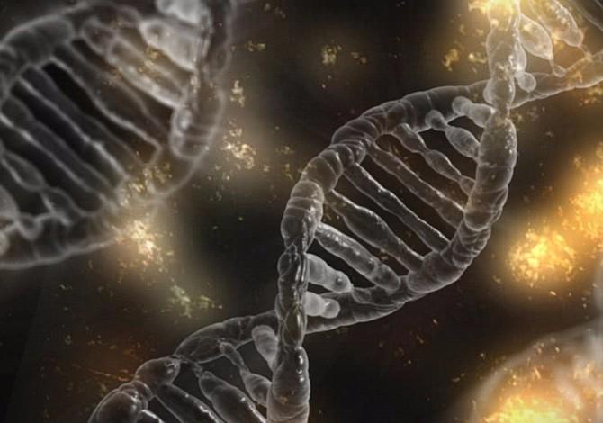 Desarrollan organismo semi-sintético capaz de crear proteínas artificiales