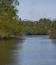 TASAJERA. Los recorridos en lancha permiten disfrutar de los manglares.