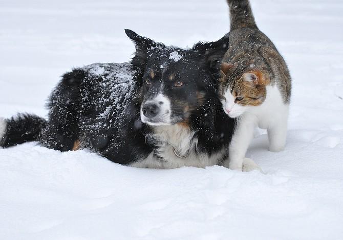 Recomendaciones para el cuidado de tus mascotas durante el invierno