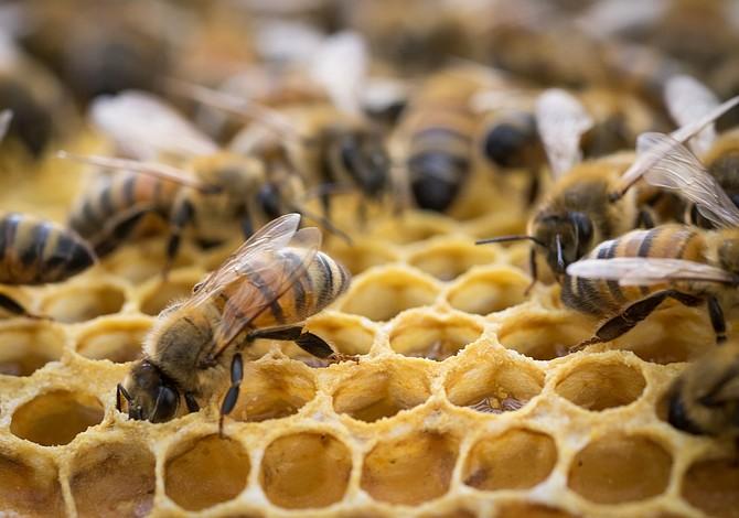 Trabajador latino atacado por abejas