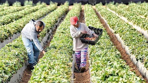 Discurso antiinmigrante preocupa a agricultores