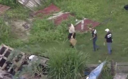 Multiple horses found slaughtered in Northwest Miami-Dade