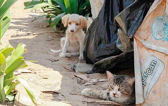 Medio millón de mascotas son abandonadas al año