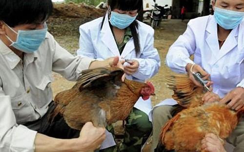 Gripe porcina afecta ya a más de 178.000 norcoreanos
