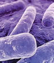 La bacteria Mycoplasma genitalium es silenciosa y resulta especialmente dañina para la mujer. Foto: Diseases Lab.