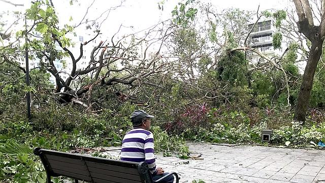 Un hombre contempla los árboles caídos tras el paso del Huracán María en Puerto Rico