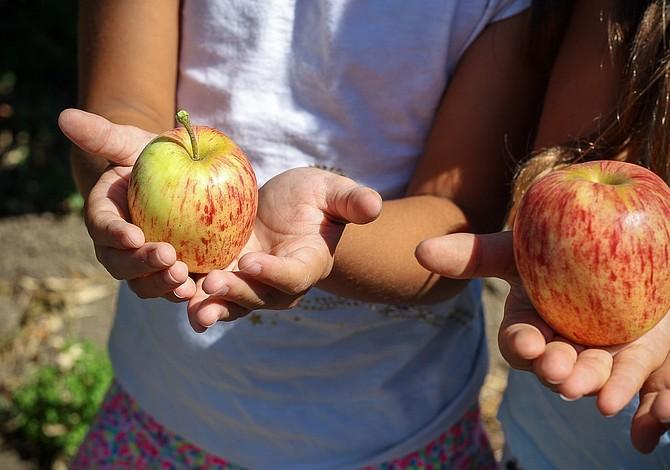 10 maneras de mejorar los hábitos alimenticios en los niños en casa