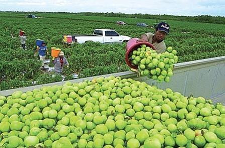 Advierten peligro que supone para agricultura las leyes migratorias de EEUU