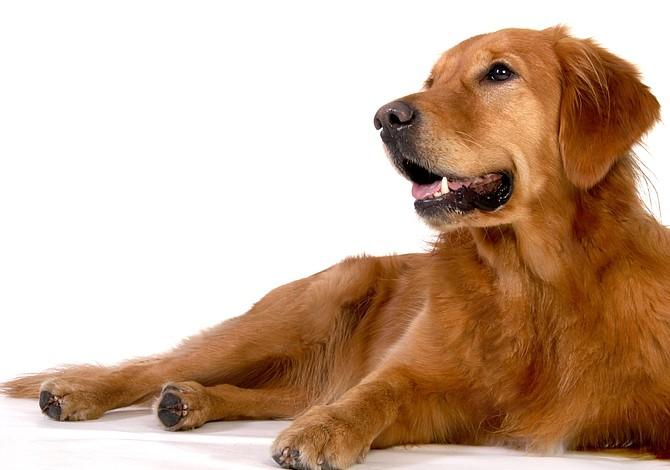Un nuevo tratamiento contra el cáncer usado en perros quizás pueda funcionar en humanos